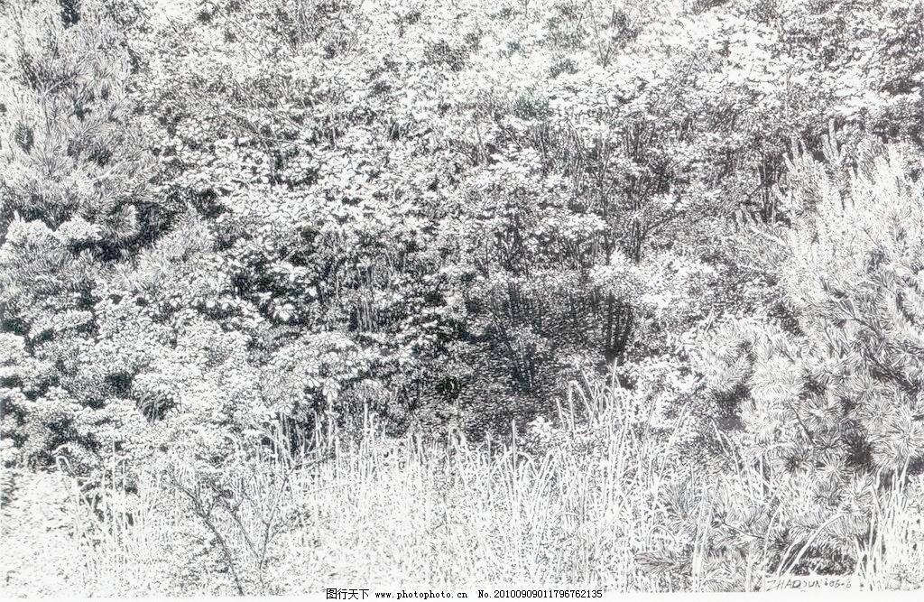 树林模板下载 树林 钢笔画 线条 风景画 黑白画 线稿 线描 中国画 树