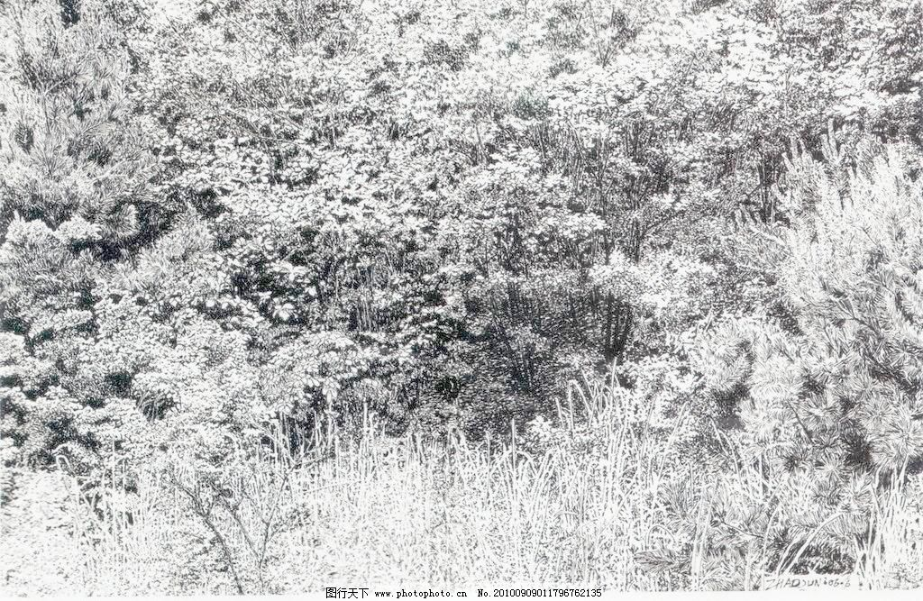 72DPI JPG 风景画 钢笔画 黑白画 绘画书法 设计 树 树林 树木 树林设计素材 树林模板下载 树林 钢笔画 线条 风景画 黑白画 线稿 线描 中国画 树 树木 绘画书法 文化艺术 设计 72dpi jpg 家居装饰素材 山水风景画