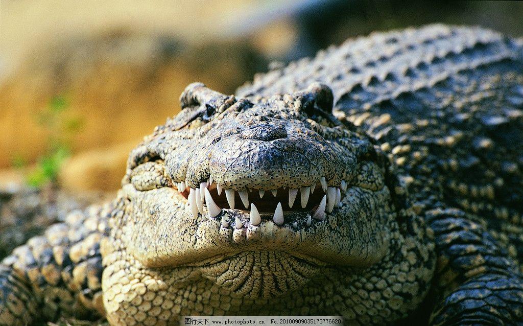 鳄鱼 野生动物 生物世界 摄影 304dpi jpg