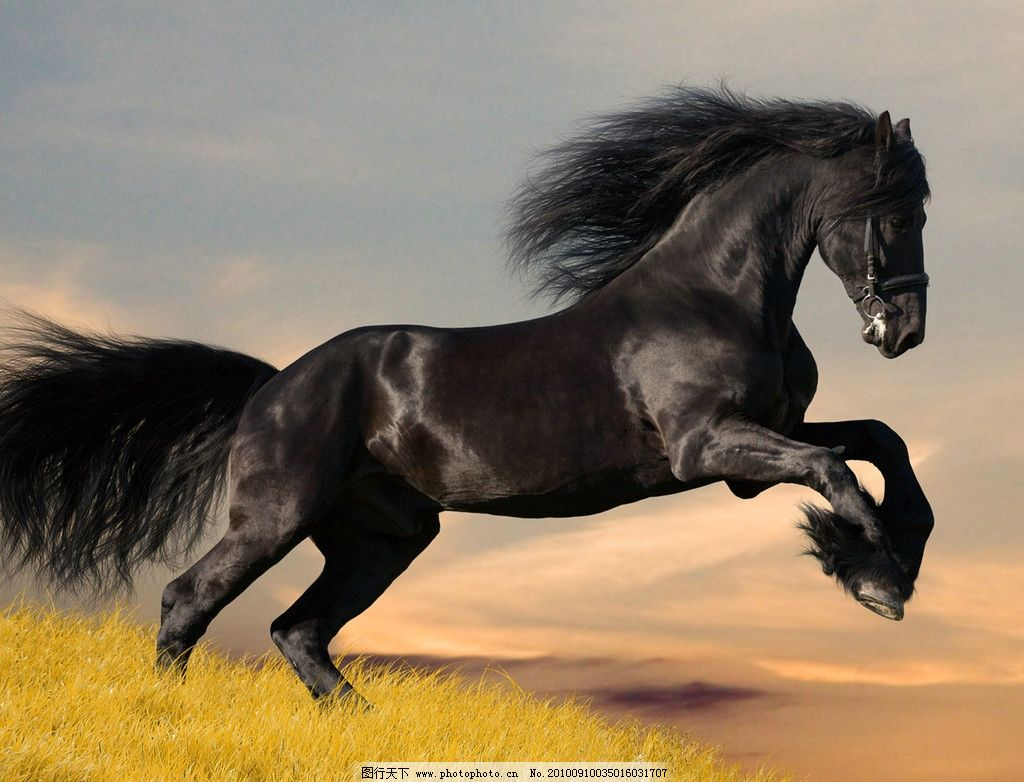 奔腾 骏马 草原 野生动物 生物世界 摄影