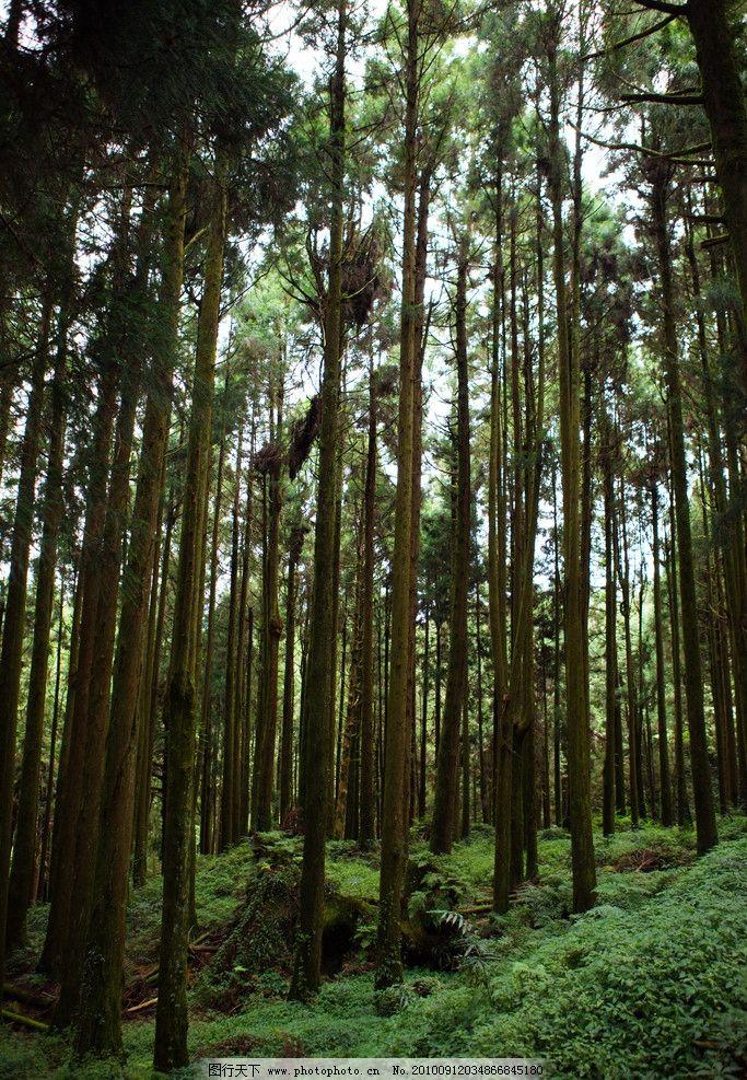 阿里山森林 台湾 宝岛 台湾风景 自然 大自然 树林 花草 树木