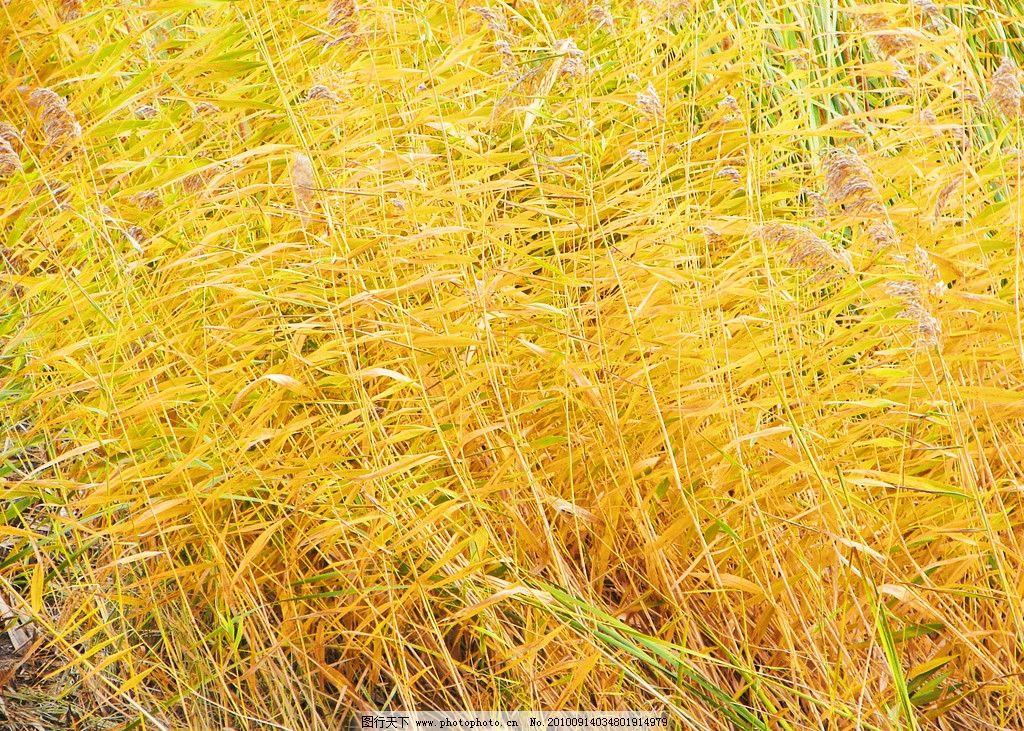 田园 东北风景 草 草丛 自然 大自然 自然风景 自然景观 摄影 家乡的