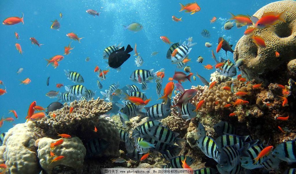 海底世界 海底 海洋 海洋生物