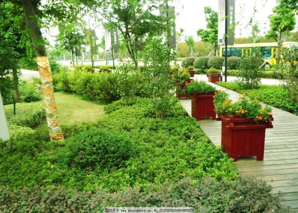 园林内景 花盆 树木 花草 木板 素材 摄影 风景摄影 自然风景 自然
