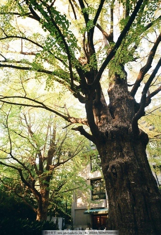 大树幼儿园手工制作根到叶