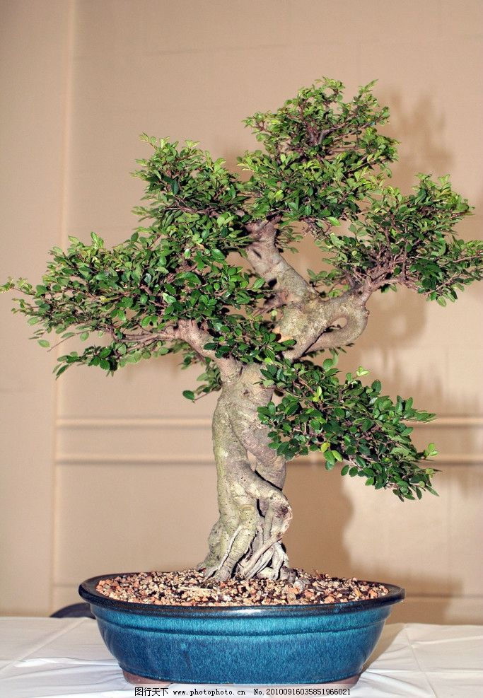 室内盆栽图片_树木树叶_生物世界_图行天下图库
