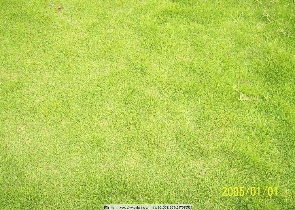 草地 草地背景 清新草地 绿色 自然风景 自然景观 摄影 230dpi jpg