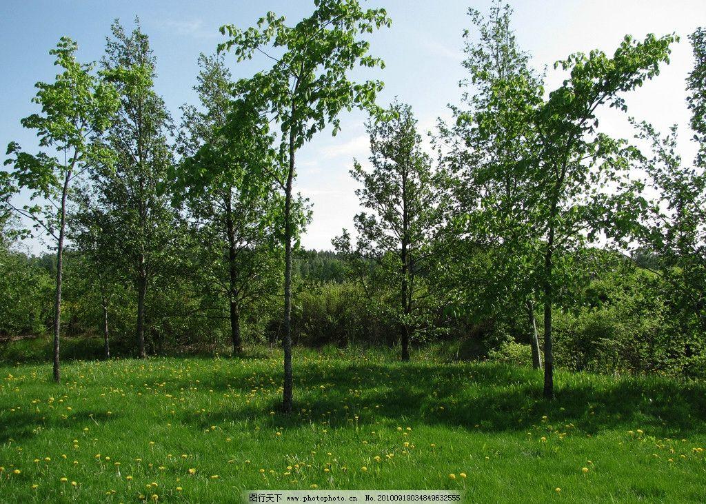 绿色树林 风光摄影图片 自然风光 美丽风光 美丽风景 风光图片