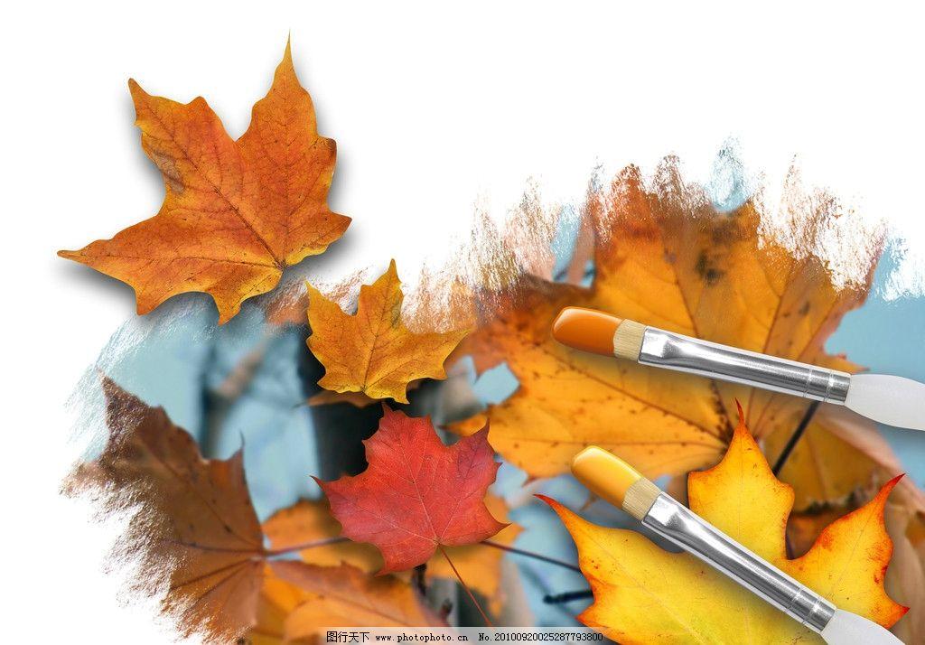 秋天的枫 画笔/秋天的枫叶 画笔图片