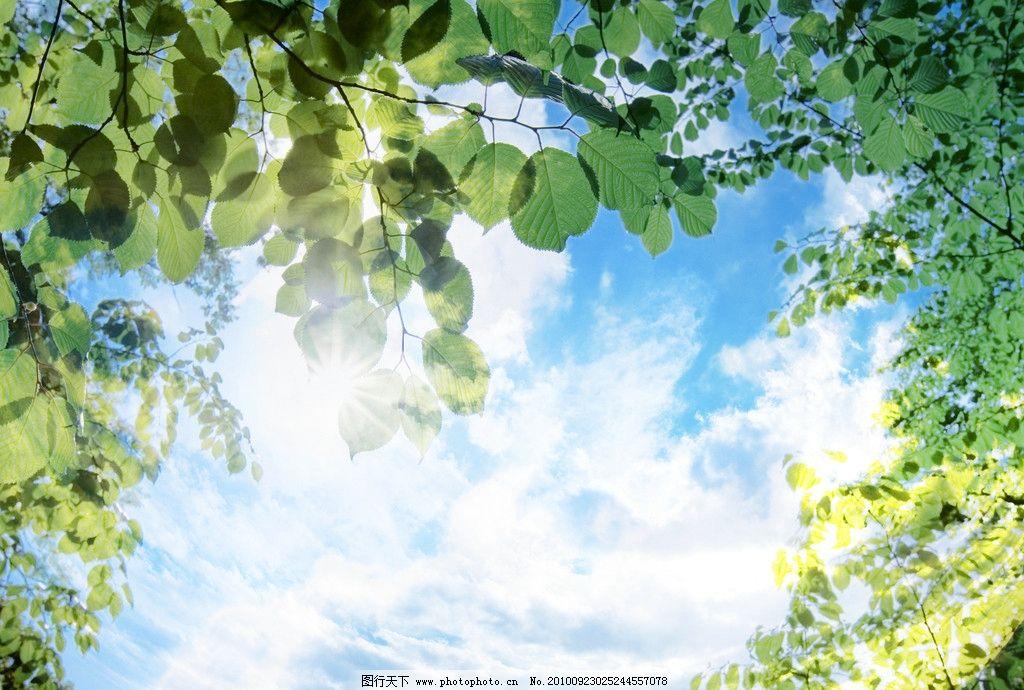 蓝天白云图片 蓝天 白云 树叶 绿色 其他 自然景观 设计 350dpi jpg
