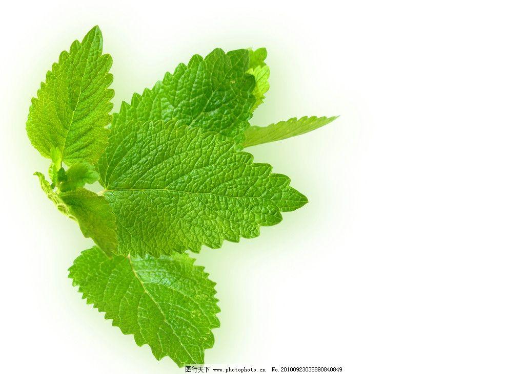 绿叶 树叶 树枝 绿色 背景 森林 大自然 淡 漂亮 壁纸 摄影