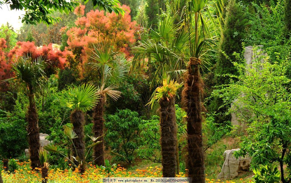 缤纷花树 摄影 自然 园林 植物 树木 小花 树木树叶 生物世界 300dpi