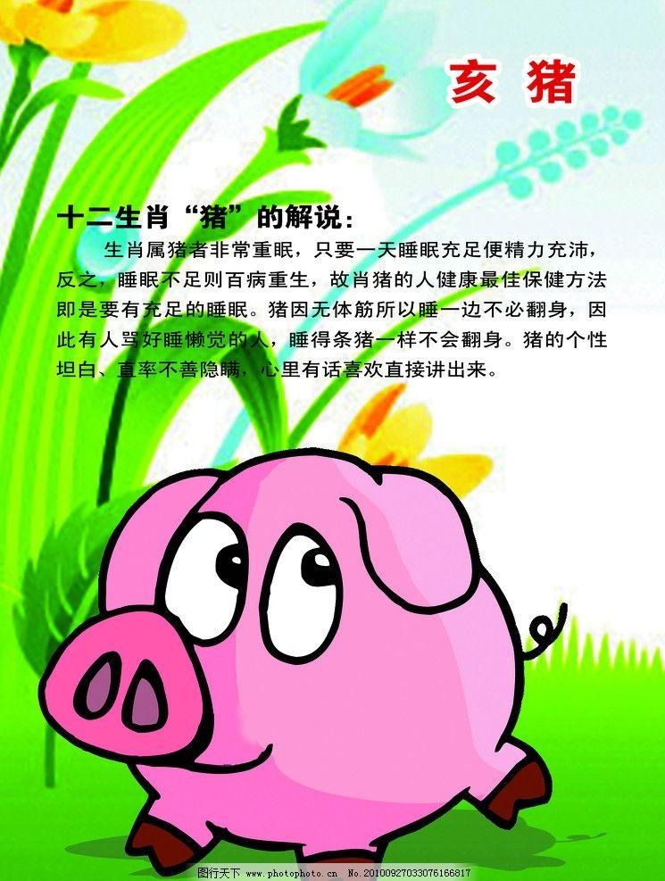 十二生肖猪图片