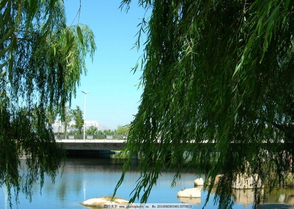 柳树 湖边 桥 绿水 蓝天 曲师大校园 夏季 秋初 美景 自然风景 自然