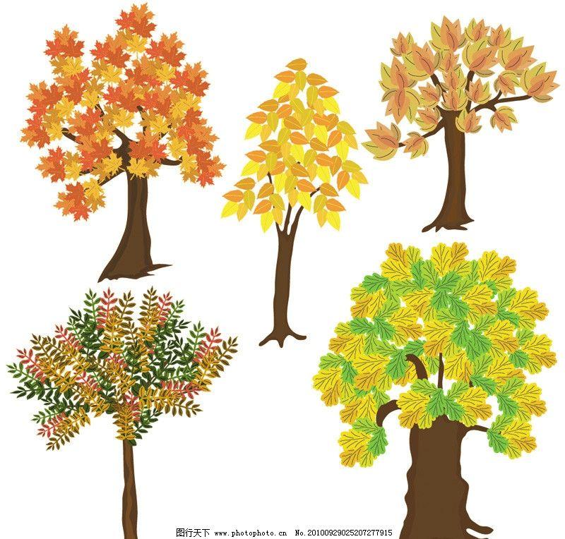 秋天树木 枫叶树图片