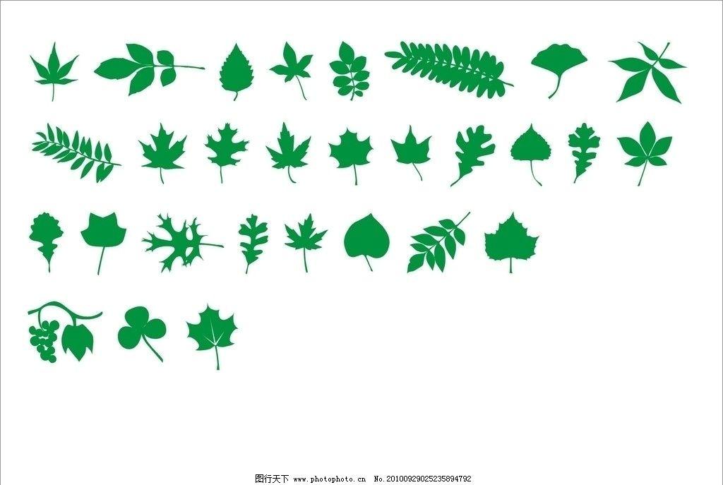 绿色的叶子 树木树叶