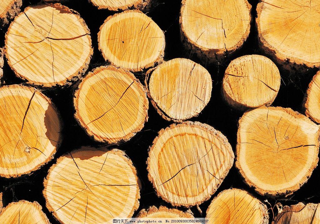 木头图片_树木树叶_生物世界